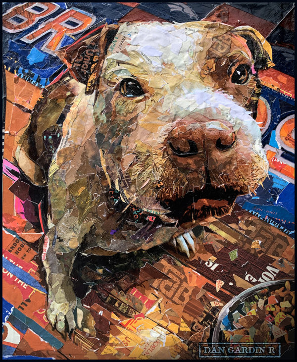 tabby the dog collage
