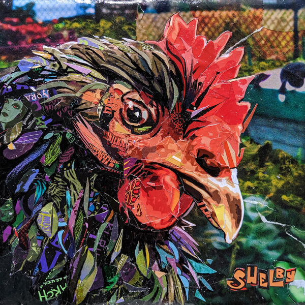 shelby the hen